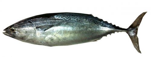 Gambar Ikan Tongkol Singgang Terengganu Jamu Selera Mstar Gambar